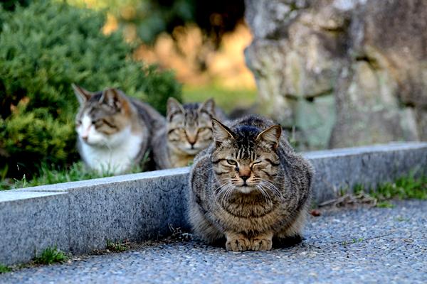 枚方市 山田池公園 猫